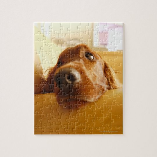 Irish Setter on sofa Jigsaw Puzzle