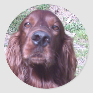 Irish Setter Round Sticker