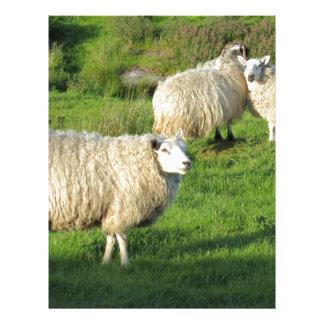 Irish Sheep Letterhead