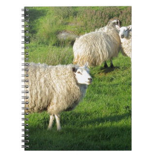 Irish Sheep Notebooks