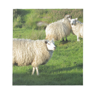 Irish Sheep Notepad