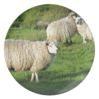 Irish Sheep Plate
