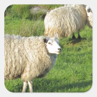 Irish Sheep Square Sticker
