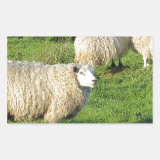 Irish Sheep Sticker