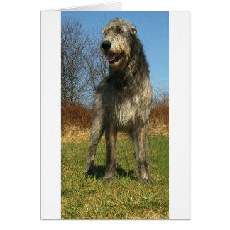 irish-wolfhound-full card
