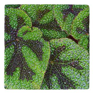 Iron Cross Begonia Floral Stone Trivet