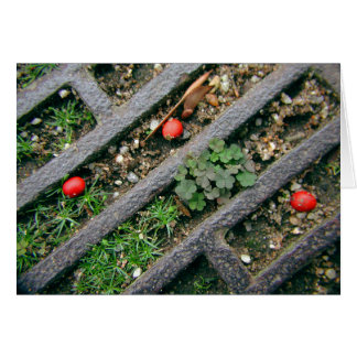 Iron Grate & Berries - Notecard Note Card