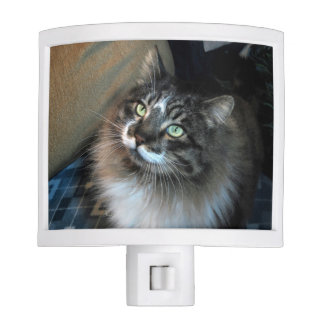Irresistible Cat Night Light