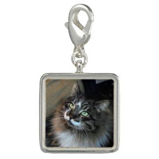 Irresistible Cat Zorro Charm