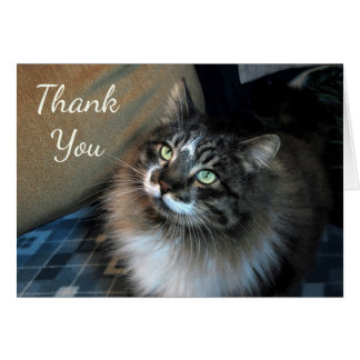 Irresistible Cat Zorro Thank You Note Card