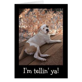 Irresistible Porch Dog Get Well Card