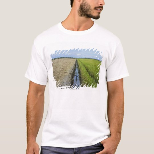 irrigation channel in between rice fields T-Shirt