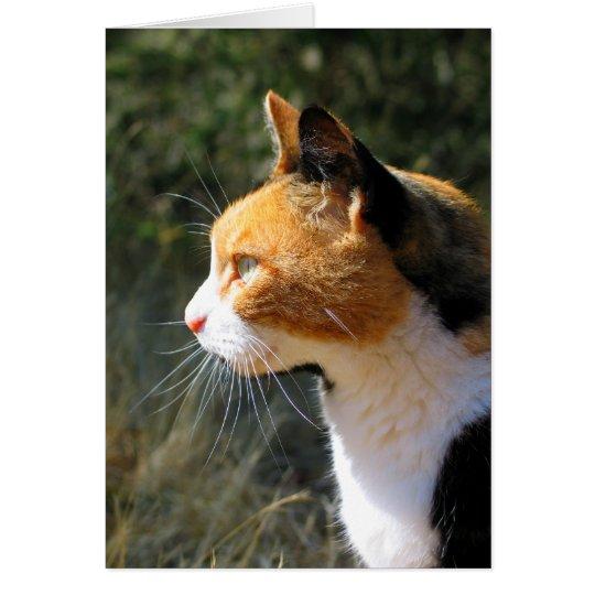 Island Cat Greeting Card