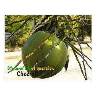 Island (Coconut) Postcard