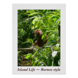 Island Life ~ Borneo style Poster