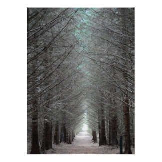 Isle of Mull Forest Poster