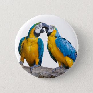 isolated ara ararauna parrot 2 inch round button