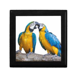 isolated ara ararauna parrot jewelry box