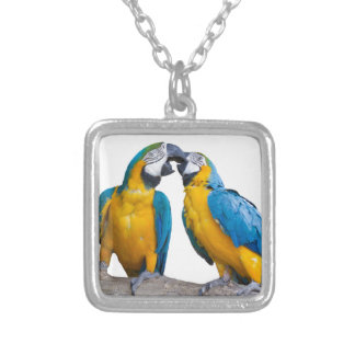 isolated ara ararauna parrot silver plated necklace