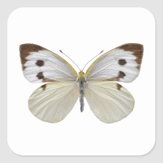 Isolated Large White butterfly PNG Square Sticker