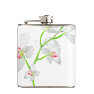 Isolated Orquideas Blossom Flasks