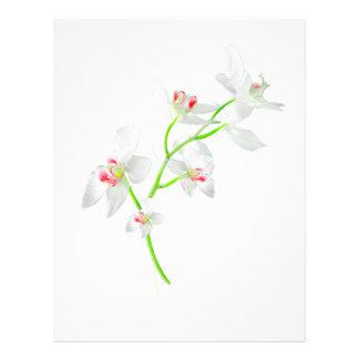 Isolated Orquideas Blossom Letterhead