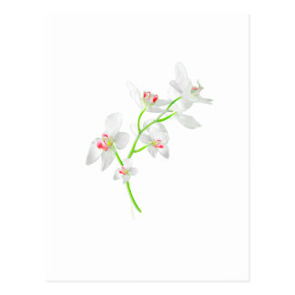 Isolated Orquideas Blossom Postcard