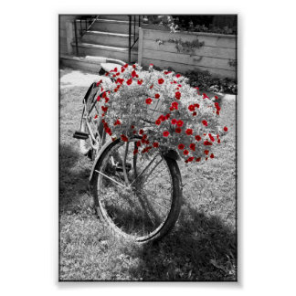 Isolated Red Color Flowers Black and White Bicycle Poster