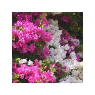 Israel Blossoms Canvas Print
