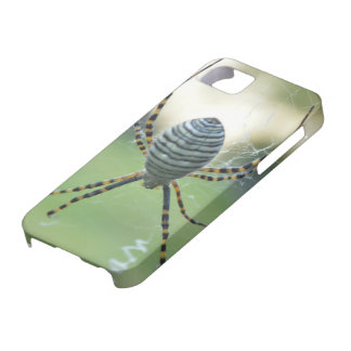 it founds of cellular ray spider case for the iPhone 5