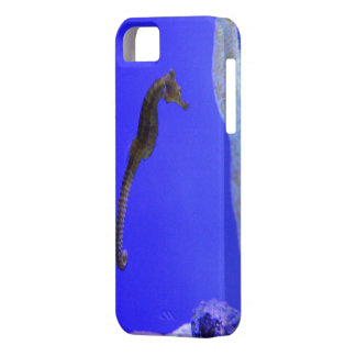 it founds sea horse iPhone 5 cover