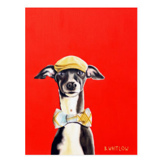 Italian Greyhound Dog Postcard - Harry