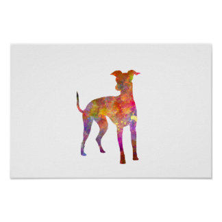 Italian Greyhound in watercolor Poster
