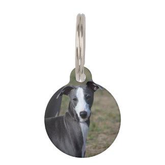 Italian Greyhound Pet Name Tag