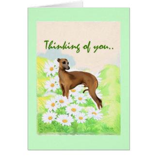 Italian Greyhound: Thinking of You Card