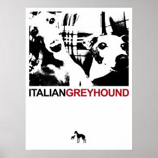 Italian Greyhound White Poster