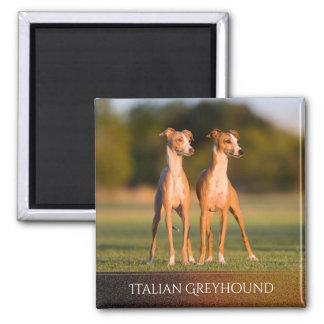 Italian Greyhounds Magnet