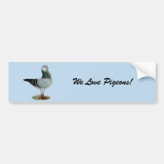 Italian Owl Grizzle Pigeon Bumper Sticker