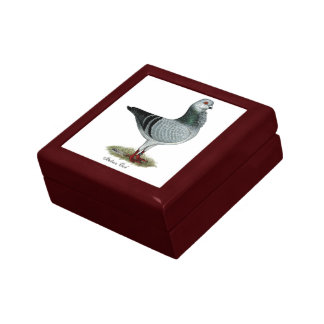 Italian Owl Grizzle Pigeon Keepsake Box