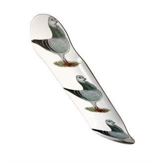 Italian Owl Grizzle Pigeon Skate Boards