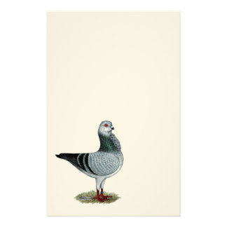 Italian Owl Grizzle Pigeon Stationery