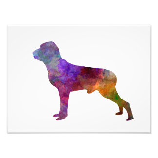 Italian Pointer in watercolor Photo Print