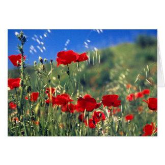 Italian Poppies Card