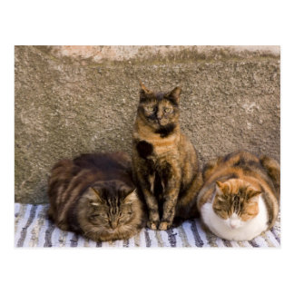 Italy, Cinque Terre, Vernazza. Three cats beside Postcard
