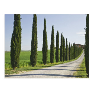 Italy, Tuscany. Cypress trees line driveway to Postcard