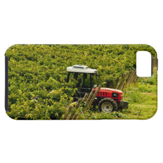 Italy, Tuscany, Greve. Pickers at work during iPhone 5 Covers