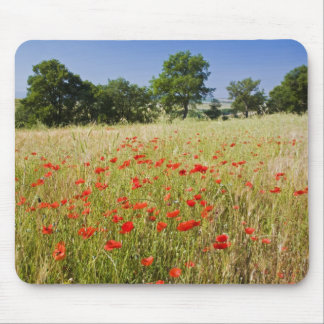 Italy, Tuscany, Meadow with Summer Poppies and Mouse Pad