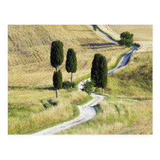 Italy, Tuscany, Pienza, Val d'Orcia, Cypress Postcard