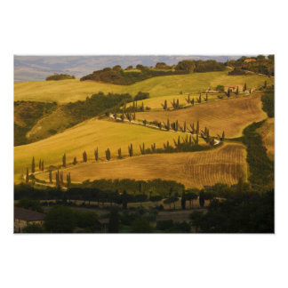 Italy, Tuscany, ZigZag Road in Tuscany. Poster