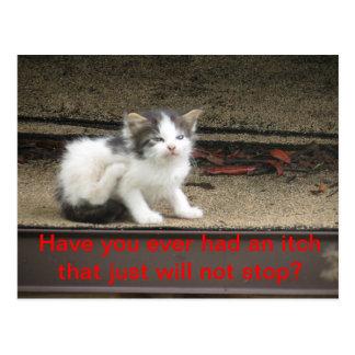Itchy Kitten Postcard